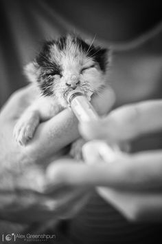 Heartbreaking Photo of a Stray Kitten's Will to Live (nothing like feeding a baby kitty) Crazy Cat Lady, Crazy Cats, Beautiful Creatures, Animals Beautiful, I Love Cats, Cute Cats, Maurice Careme, Baby Animals, Cute Animals