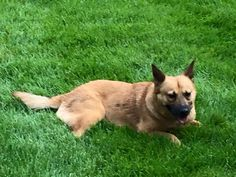 Tails of Courage added 2 new photos.Like Page December 23 at 8:42pm FOUND!!!!! Belize, one of our adopted dogs was visiting family in Farmington, CT and got loose. Last seen on somersby way. If spotted please contact TOC! 8776382457