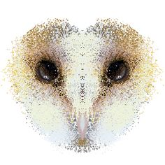 Barn Owl digital illustration detail; Kinga Kwiczor