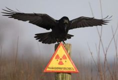 Chernobyl today (33 pictures)