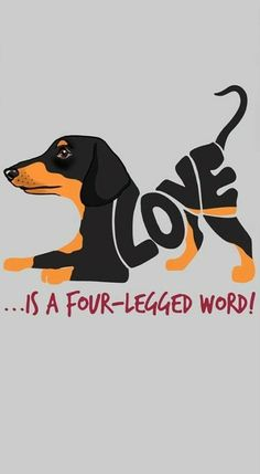 """Figure out even more information on """"Dachshund dogs"""". Check out our internet site. Dachshund Art, Daschund, Amor Animal, Weenie Dogs, Doggies, Dog Quotes, Four Legged, Dog Art, Puppy Love"""