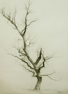 Miguel Ángel Oyarbide. Branches. There's something about this that just draws me into it.