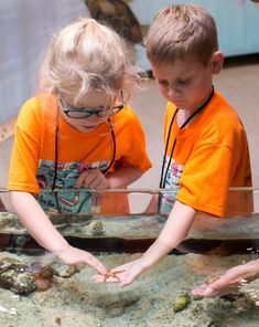 MustDo.com | Kids love the touch tank at the Conservancy of Southwest Florida Nature Center in Naples, Florida.