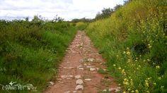 The Roman Road & Mustard Flowers on the Camino de Santiago