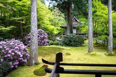 石楠花 - 三千院 / Sanzen-in Temple / Japan | by Active-U