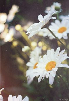 background | Tumblr #flowers #summer #filter #vintage
