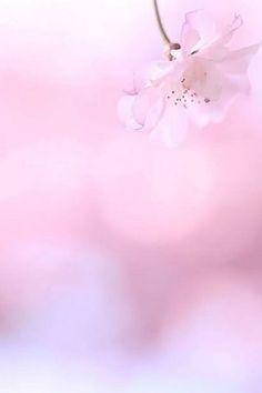 couleur rose - Page 8