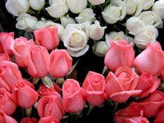 Flores Lindas Para Fondo En Hd Gratis 15 En HD Gratis