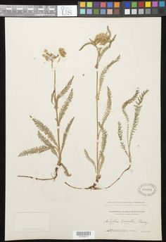 Botany Collections Search