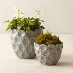 """A contemporary pattern of stacked circles adds texture to this ceramic vessel.- Ceramic- Indoor or outdoor use- Drainage hole not included- ImportedSmall: 3.5""""H, 3.25""""D, 4.75"""" diameter at mouth, 2.5"""" diameter at baseLarge: 5.5""""H, 5.25""""D, 5.75"""" diameter at mouth, 3"""" diameter at base"""