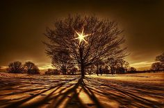 Tree Golden Light