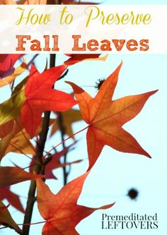 How to Preserve Fall Leaves with Glycerin - A tutorial for preserving fall leaves color. After you preserve fall leaves you can use them for crafts.