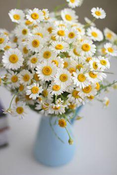 Deko Ideen für Ostern 2016 | Sie können auf Wildblumen wählen, wie Gänseblümchen – die Frühling Blumen. Sie sind bunt, einfach, frisch und bringen einen jugendlichen Geist in das Haus. http://wohn-designtrend.de/deko-ideen-fuer-ostern-2016/