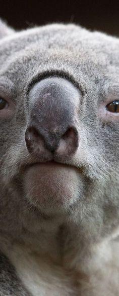 Koala - like Stich? Maybe ya!