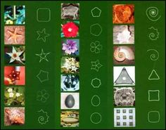 shapes in nature - Google Search