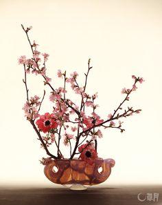 日本の春の象徴ともいえる桜。優しい色合いの花器から淡いピンクのアネモネをのぞかせ、春の訪れの喜びを表現しました。花材:桜、アネモネ 花器:ガラス花器(岩田藤七)Flowering cherry symbolize springtime in Japan. The hazy pink anemone peeks out from the soft colored vase to happily tell us that spring has come. Material:Flowering cherry, Poppy anemone Container:Glass vase #ikebana #sogetsu