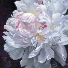 Watercolor Peony - Floral - B.Fox Fine Art