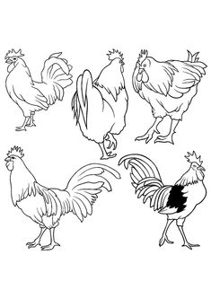 Free Printable Top 30 Rooster Coloring Book For Kids You Can Print Or Download Them 2017
