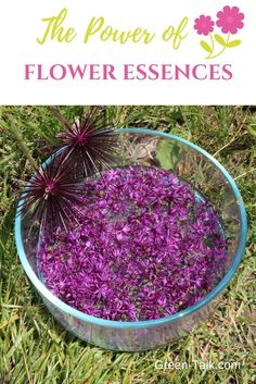 Flower Essences: The Emotional Blockage Game Changer