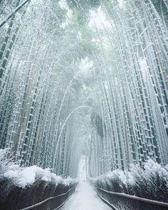 Bamboo after snow. Kyoto, Japan by mantaroq. : pics
