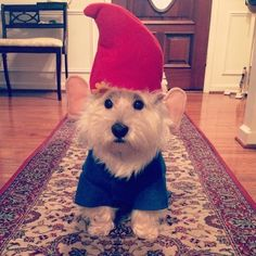 The cutest garden gnome you ever did see. | 27 Dog Halloween Costumes You'll Want To Steal For Yourself