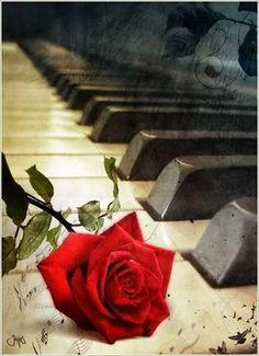Beautiful piano and rose.