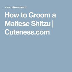 How to Groom a Maltese Shitzu | Cuteness.com