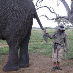 Unique Elephant Experience in the Okavango Delta, Botswana