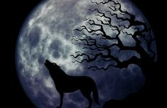 Loup, Hurlement, Lune, Bizarre, Surréaliste, Atmosphère