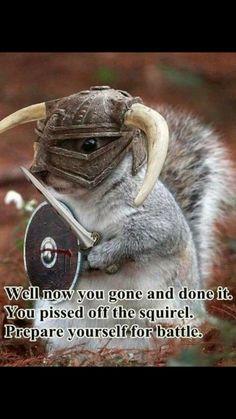 armed & dangerous :)) Funny Animal Memes, Animal Funnies, Funny Animals, Cute Animals, Animal Humour, Happy Animals, Squirrels, Raccoons, Squirrel Humor