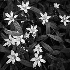 Monday is for flowers! Monochrome, Around The Worlds, Photo And Video, Black And White, Flowers, Plants, Photography, Instagram, Photograph