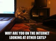 What every cat thinks...