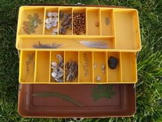 make a nature box out of an old fishing tacklebox- in the blog they decorated the outside too
