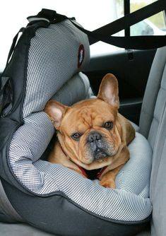 PupSaver Crash-Tested Car Safety Seat for Small Dogs ** More info could be found at the image url.