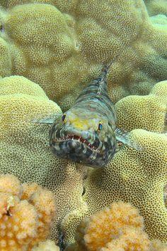 toothy grin by BarryFackler, via Flickr