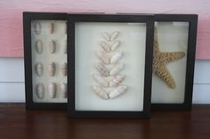 Put shells in shadowboxes for post-vacation decor. Check out 8 more ways to upcycle your beach vacation treasures >> http://blog.diynetwork.com/maderemade/2015/09/14/beach-memories-diy-decor-projects/?soc=pinterest