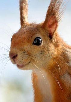 (**Feelin' Squirrely** group board)