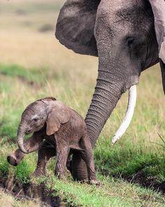 Elephant Love, Little Elephant, Baby Elephants, Wildlife Safari, Wildlife Nature, Wildlife Paintings, African Elephant, Funny Animal Pictures, Wildlife Photography