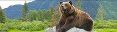 Alaska Wildlife Conservation Center Mile 79 Seward Highway Girdwood, AK 99587
