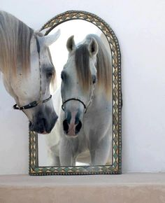 Here's looking at you ... Gorgeous Arabian looking at himself in the mirror. Looke at his sweet expression! Isn't that precious!?