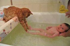 fullcats:お手伝い。