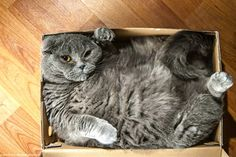 These 12 Cats Cannot Contain Their Love For Boxes #refinery29  http://www.refinery29.com/the-dodo/93#slide3  Um...help? There's not enough box.Related: Frisky Husky Has Pouncy Playdate With Little Brother