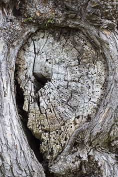 Can you see the face in this formation? Weird Trees, Enchanted Tree, Hidden Images, Tree People, Tree Faces, Unique Trees, Nature Tree, In The Tree, Tree Art