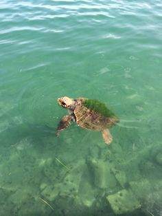 Seaturtle at Vonitsa Islands, Turtle, Greece, Landscapes, Animals, Style, Greece Country, Paisajes, Swag