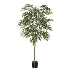 This large artificial ficus is a superb replica of a timeless tree in interior decoration. It is a must, when you want to create a tropical ambiance. It will be to privilege to occupy large spaces and create exotic atmospheres. Fiddle Fig Tree, Ficus Tree, Green Plants, Artificial Plants, Decoration, Houseplants, Indoor Plants, Exotic, Interior Decorating