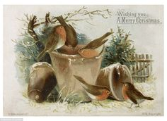 Seasonal scene: A Christmas card with robins sitting on a flower pot, which wishes the rec...
