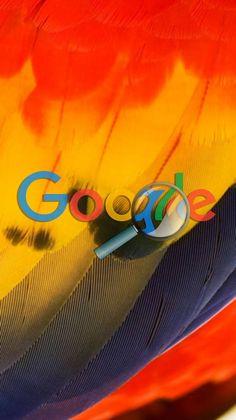 Parrot Wallpaper, Galaxy Phone Wallpaper, Red Wallpaper, Cellphone Wallpaper, Mobile Wallpaper, Wallpaper Quotes, Cool Backgrounds, Wallpaper Backgrounds, Google Pixel Wallpaper