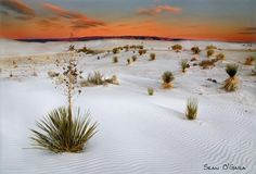 Never been, but I would really like to go! White Sands, New Mexico