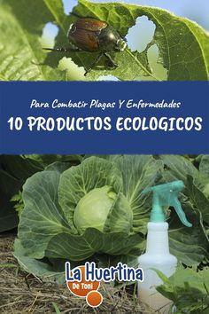 10 Productos Ecológicos Para Combatir Plagas Y Enfermedades - La Huertina De Toni Cabbage, Life Hacks, Vegetables, Tips, Nature, Plants, Gardening, Gardens, Edible Garden