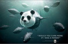 WWF campaign...